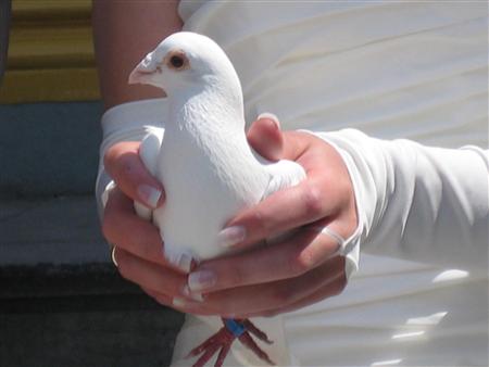 Witte vleugels van vreugde en verdriet bruiduiven en vogel verhuur in ter apel groningen - Witte salontafel thuisbasis van de wereldberoemde ...